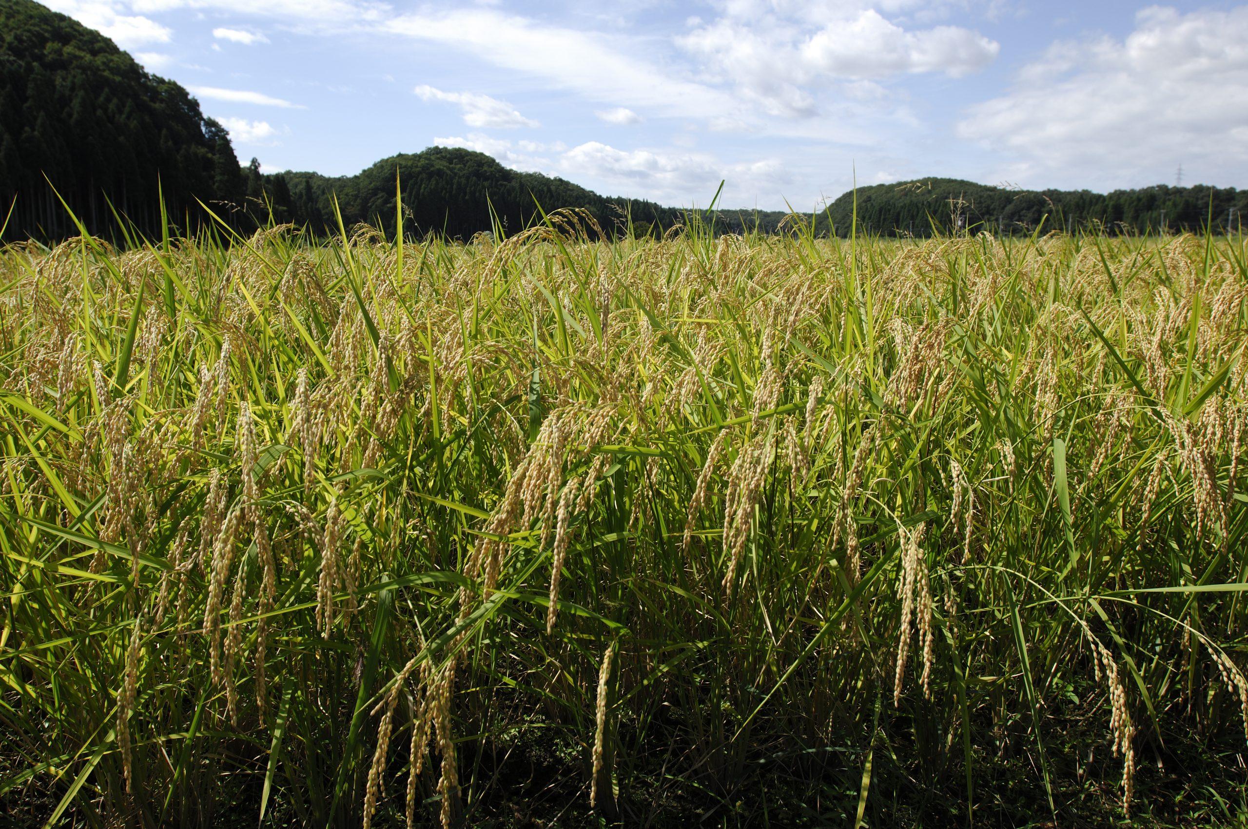 のむら農産のブログを新しく開設しました。